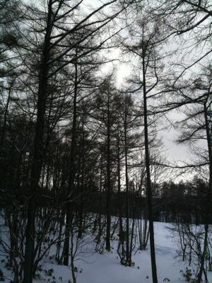 雪待ちモス
