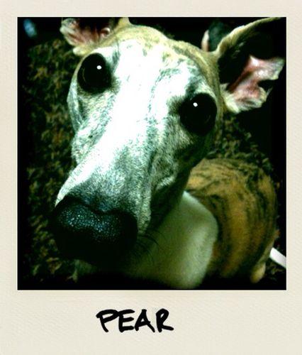pear .jpg