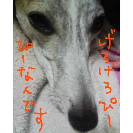 20081223173744.jpg