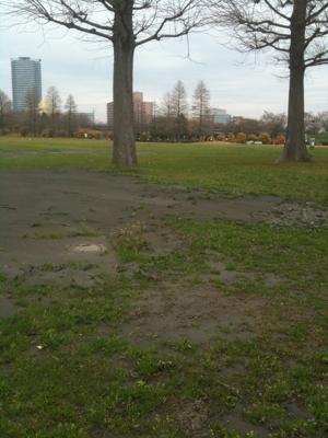 本日の辰巳公園