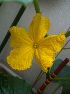 黄色の花ざかり